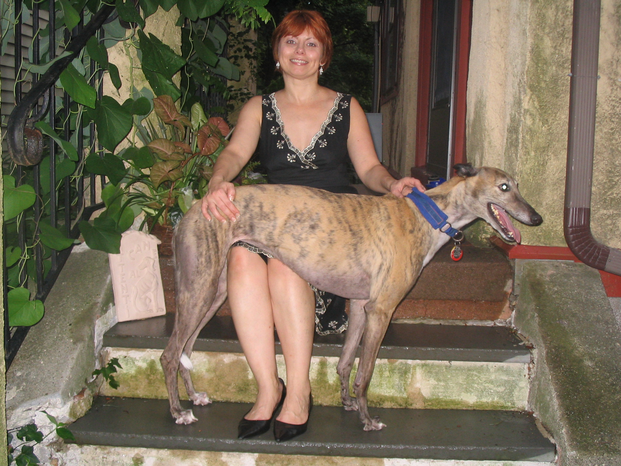 The author, Christine, with her greyhound Zoe