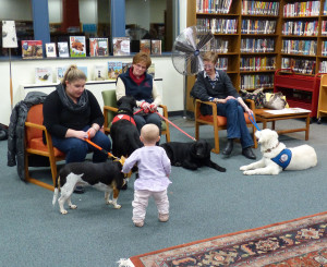 Should Public Service Dogs be bound by Leash Laws?